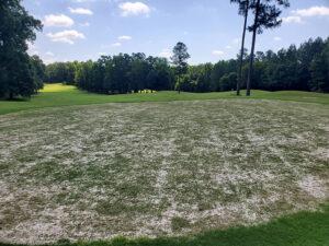 Bermudagrass Growing on Hole #13